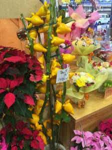 Not sure what the yellow flowers are!